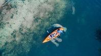 5 Fun Facts About Florida Manatees
