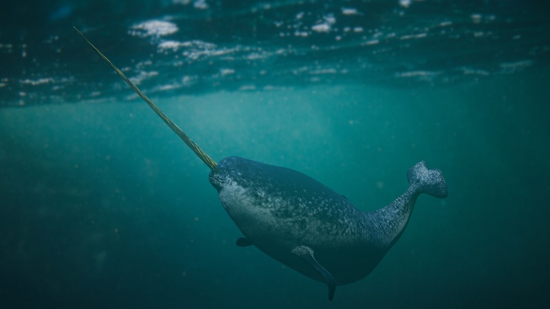 This Winter, Fish Like a Narwhal