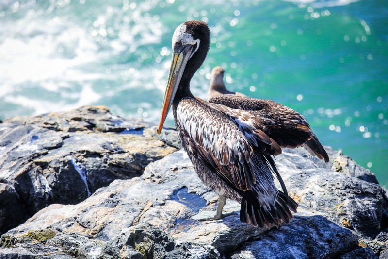 Bird Watching For Your Best Catch Yet