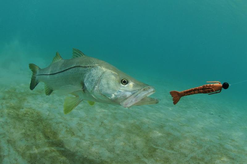 It's Snook Season - Do You Have Your Blackfin Boat?